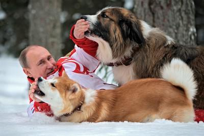 Владимир Путин с акита-ину Юмэ и болгарской овчаркой Баффи