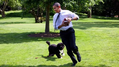 Барак Обама и португальская водяная собака Бо