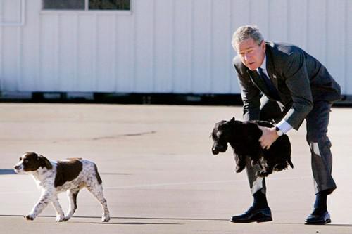 Джордж Буш-мл. с английским спаниелем и шотландским терьером