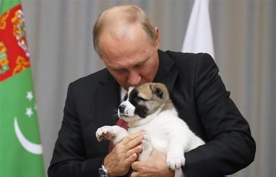 Владимир Путин и щенок алабая Верный