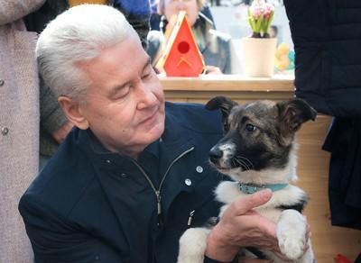 Сергей Собянин и щенок Джоуи