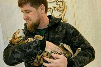 Рамзан Кадыров и тойгер