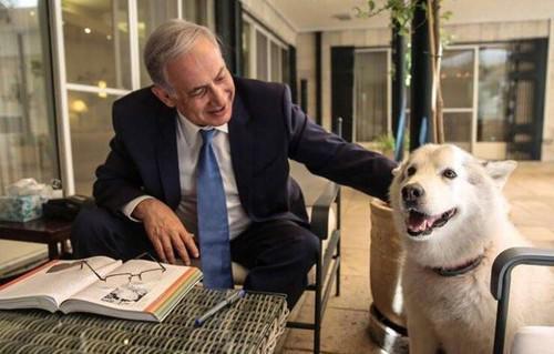 Биньямина Нетаньяху и пес Кайя